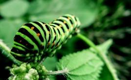 caterpillar-991433_1280