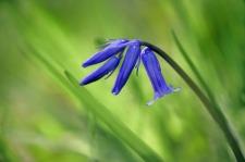 wild-flowers-1144092_1280